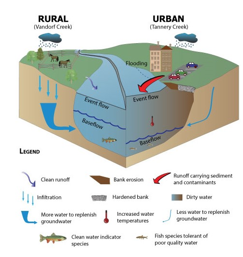 An illustration of rural and urban creeks systems. Urban systems have more flooding due to high event flows and low baseflow.
