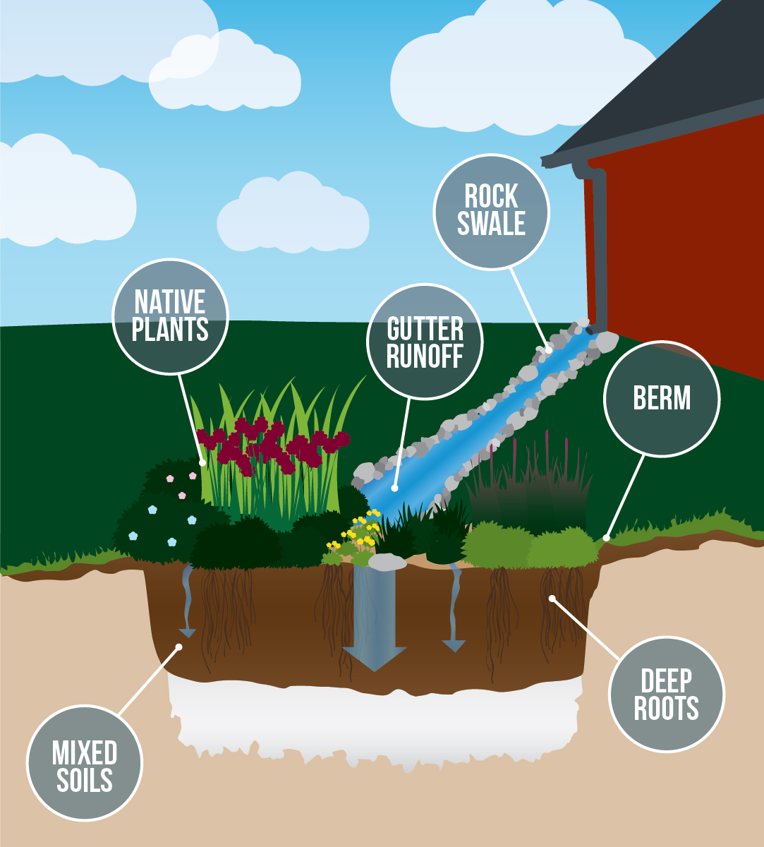 illustration showing the components of a rain garden including native plants