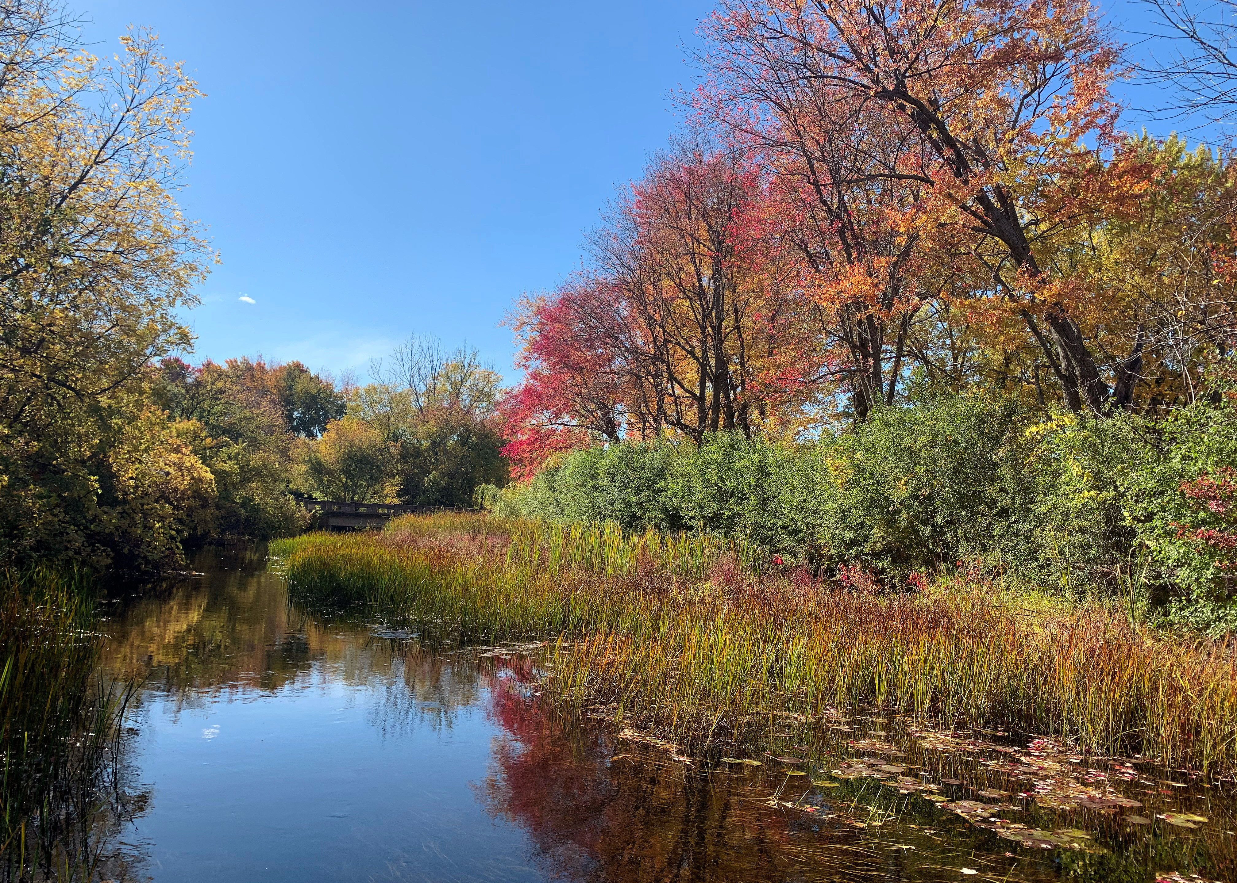 Beaver-River-Trail-Fall-Colours.jpg