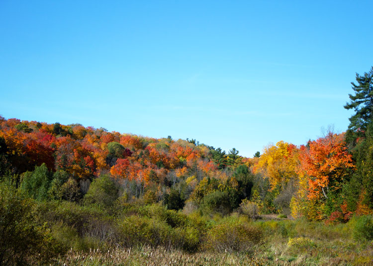 Fall-Colours-at-Scanlon-Creek.jpg