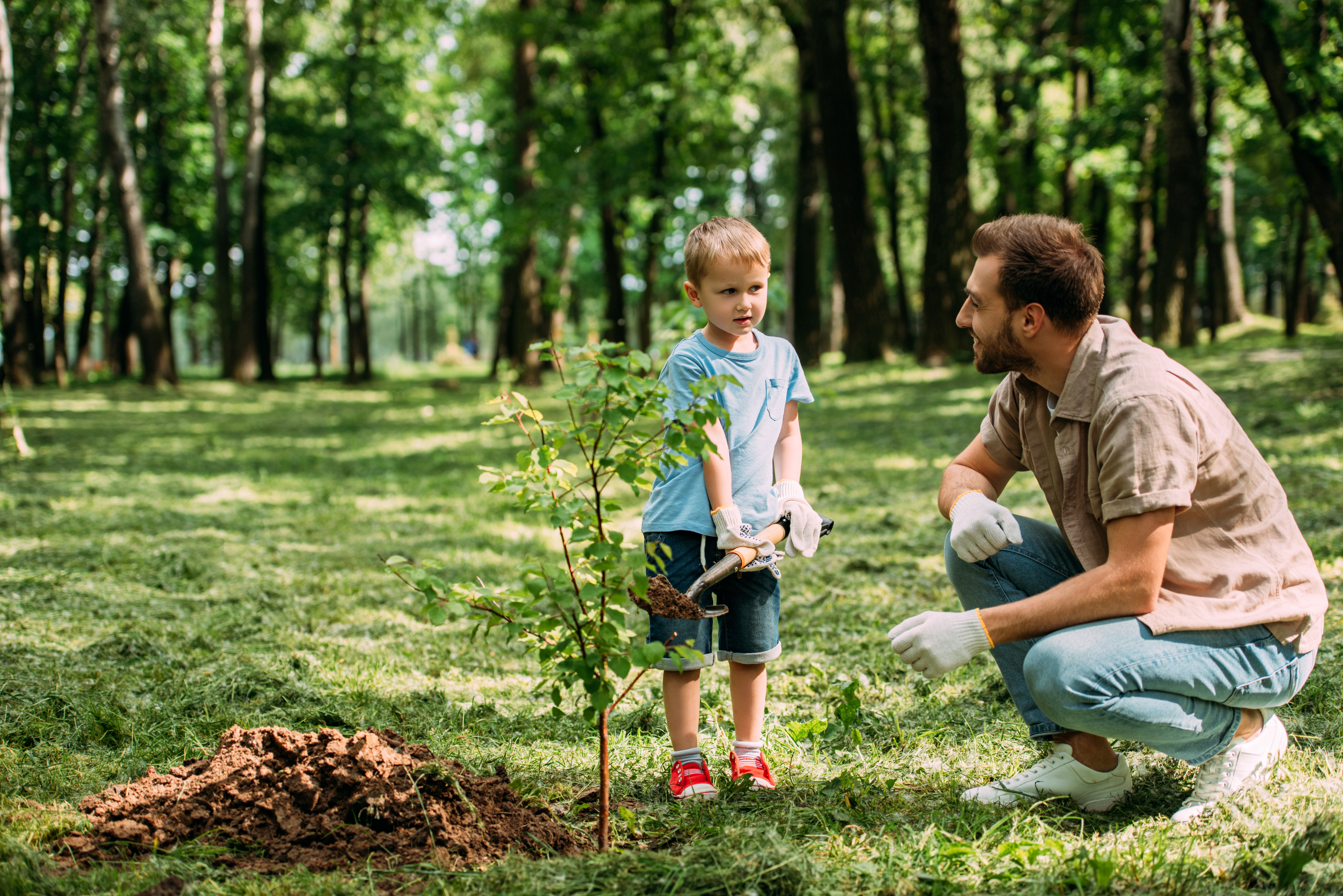 A man and boy planting a tree. The boy is holding a shovel behind a freshly planted tree. A forest is in the background.