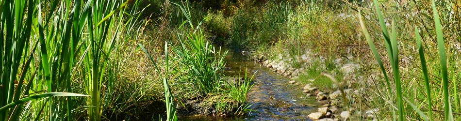 A stream surrounded by tall, green grasses.