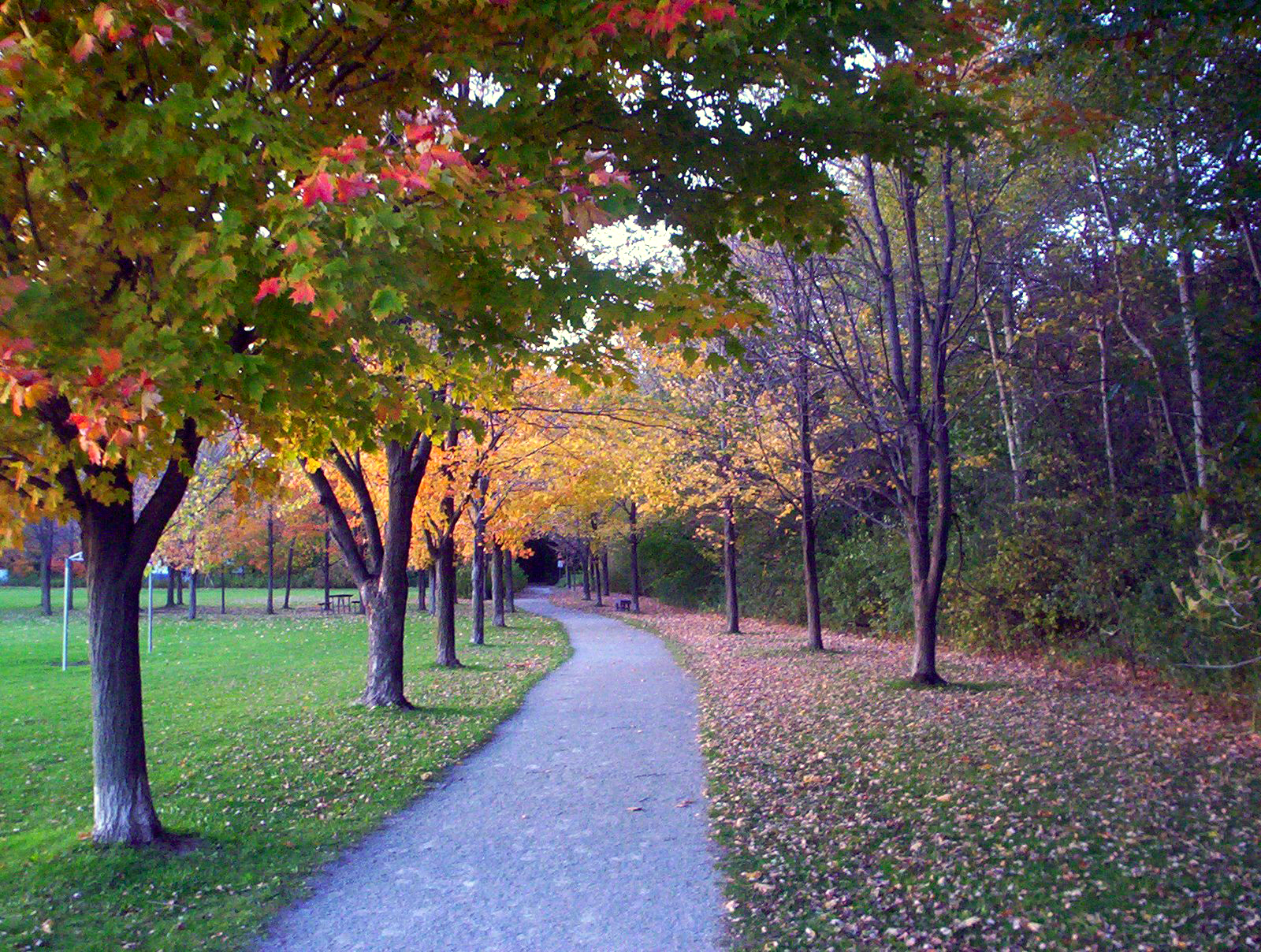 Fitness trail of Sheppard's Bush in October 2006.